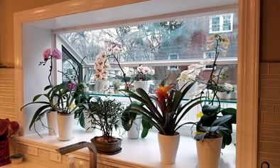 Garden-Window-Fairfield-County-CT_orchids
